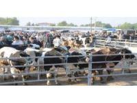 Trakya'nın en büyük hayvan pazarına 1 haftalık tedbir