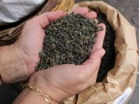 Yeşil çay 'pudra' halinde mutfağa girecek