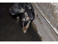 Kanala atılan yavru köpeği hayvan sever vatandaş kurtardı