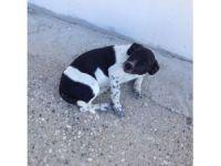 Arabanın çarptığı köpeğe Büyükşehir'den yardım