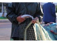 Şile'de palamut bereketi balıkçıların yüzünü güldürüyor