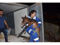 Ölüme terk edilen atlar emin ellerde