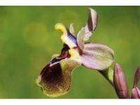Orkide türleri tehlike altında