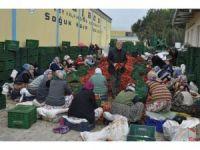 Kulaca'dan Avrupa'ya salça ihracatı sürüyor