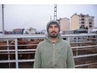 Iğdır'da çiftçilere büyükbaş hayvan dağıtımı