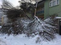 Kar yağışı ağaçların kırılmasına neden oldu