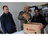 Yaralı puhu kuşu tedavi altına alındı