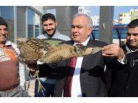 Soğuğa dayanamayan göçmen kuşa şefkat eli