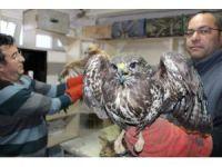 Kara kış yırtıcı kuşları da vurdu