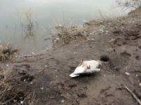 Gölet suyunu içen hayvanların telef olduğu iddiası