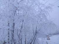 Iğdır-Erzurum karayolunda yoğun sis