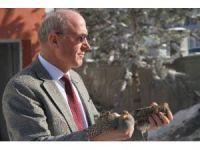 Avcılar tarafından vurularak yaralanan 2 çil keklik koruma altına alındı