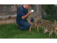 Ordu'da geçen yıl 326 yaban hayvanı tedavi edildi