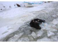 Donan gölde kırılan buzdan sulara düşen inek kurtarıldı