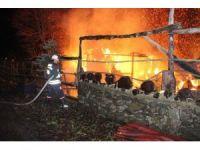 At çiftliği alev alev yandı, işyeri sahibi gözyaşlarına boğuldu