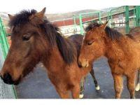 Ankara'da atlar firarda