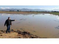 Ödemiş'te yağmur sonrası tarlalarda sel mağduriyeti