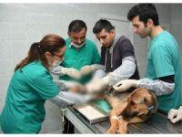Trafik kazası geçiren köpek ve yavrularına belediye sahip çıktı
