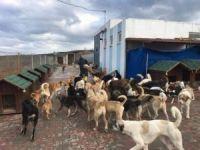 Adalar Belediyesi'nden sokak hayvanlarına mini evler