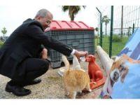 Mezitli Belediyesi, Hayvan Bakımevi yapıyor