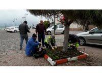 Marmaraereğlisi'nde çiçek dikimi çalışmaları