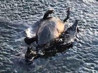 Med Marine: İzmit Körfezi'ndeki kirlilik önemli ölçüde temizlendi