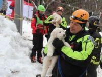 İtalya'daki çığ felaketinden 5 gün sonra 3 köpek yavrusu kurtarıldı