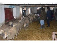 Tekirdağ Büyükşehir Belediyesi'nden hayvancılığa destek