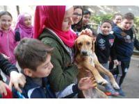 Okul bahçesine giren yavru köpek ilgi odağı oldu