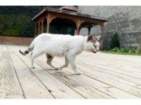 Hasta kedi belediyeye sığındı