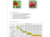 İBB unutulmaya yüz tutmuş meyveleri gün yüzüne çıkarıyor
