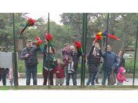 Otomobil değerindeki papağanları bakıcıları ağzıyla besliyor