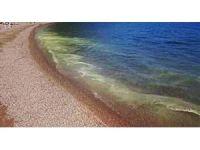 Marmaris'te Polen tozu denizi sarıya boyadı