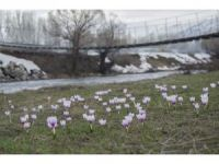 Munzur Vadisi'ne bahar geldi, çiçekler açtı