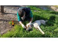 Suriye sınırında bulunan yaralı köpek askerler tarafından kurtarıldı