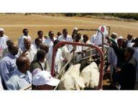TİKA Sudan Suni Tohumlama Merkezinde ürün satışlarına başlandı