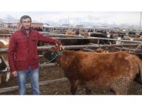 Vanlı çiftçilerin 'et fiyatı' tepkisi