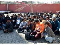 Yabancı uyruklu 85 kaçağın umuda yolculuğu Muş'ta son buldu