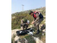 26 gündür kayıp olan gencin cesedi uçurumda bulundu