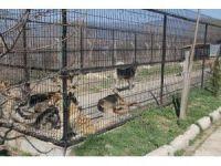 Bolu'da 10 bine yakın sokak hayvanı kısırlaştırılacak