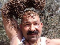 Arıları baş tacı yapan adam