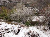 Aydın'da kar ile bahar bir arada
