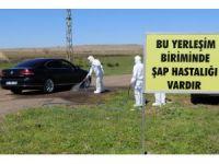 Diyarbakır'da şap hastalığı tatbikatı yapıldı