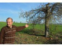Uşak Kaşbelen köyünde ağaç gaspları yaşanıyor