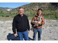 Karayolları ekipleri tarafından bulunan yaralı leylek iki ayda iyileşti