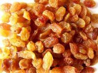 Çekirdeksiz kuru üzümde erken hasadın faturası 100 milyon lira