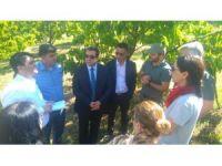 Çin Tarım Heyetinden kiraz bahçelerinde inceleme