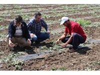 Dolu Elazığ'ın 82 köyünde zarara yol açtı