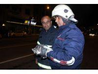 Ağaçta mahsur kalan kediyi itfaiye ekipleri kurtardı
