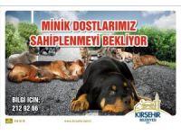 Belediye'den sokak hayvanlarını sahiplendirme kampanyası